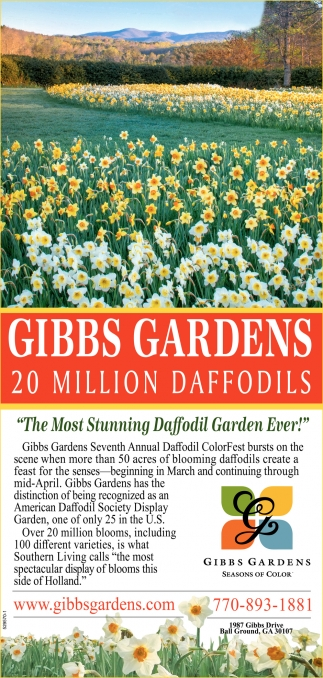 The most stunning Daffodil garden ever!